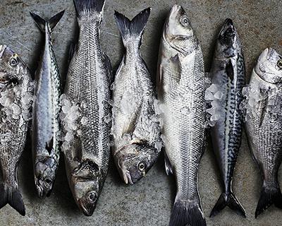 20% Fish Friday