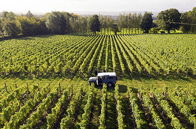 Nyetimber estate in West Sussex