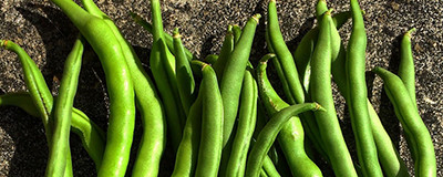 image of french beans