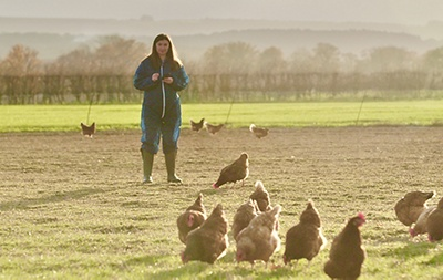 image of farmer using welfare app with chickens