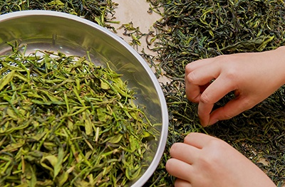 Image of tea picking